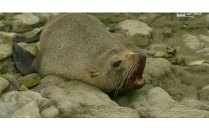The sea lions' haven